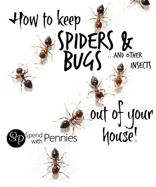 How to get rid of spiders bugs other common insects in for How to get rid of spiders in the house uk