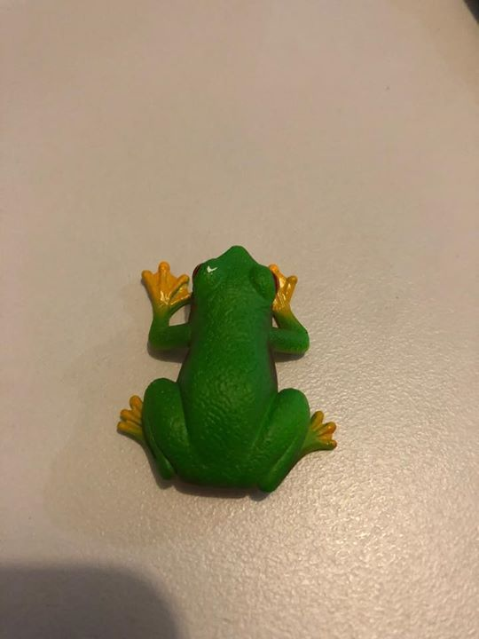 Wanted To Buy A Plastic Or Similar Looking Frog About 8 12 Cms High Can Be Any Type Of Frog Please Show Me W Bar Accessories Types Of Frogs Accessories