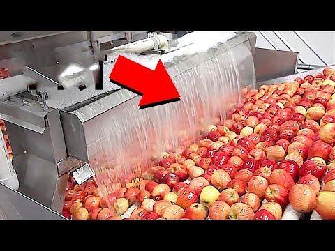 مصانع عملاقة التفاح لن تصدق أن التفاحة مطلية باللون الأحمر في المصانع Youtube Apple Hay Day Youtube