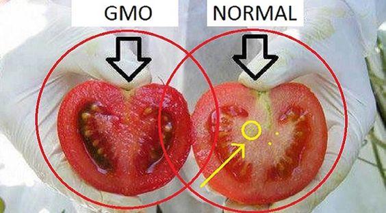 Provavelmente comes alimentos geneticamente modificados (transgénicos) regularmente e nem imaginas! Por isso é importante que os saibas identificar! E nada melhor do que esta forma simples e eficaz.