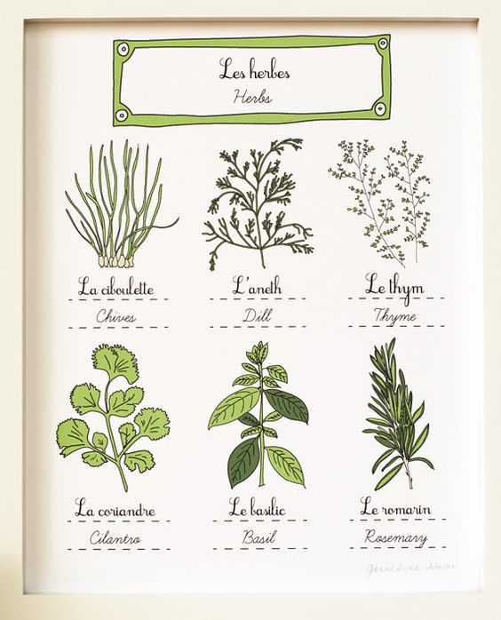 Kitchen Art Vegetables Print Botanicals Kitchen Art: Herbs Kitchen Art 8x10 Art Print