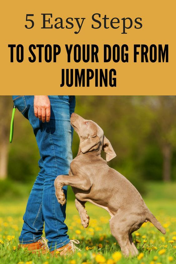 How To Stop Your Dog From Jumping Up 5 Easy Steps We Love Dogs