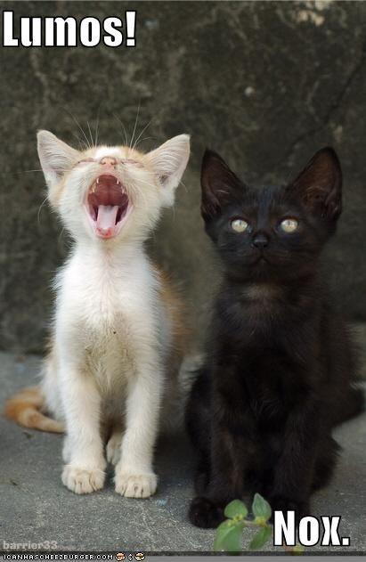 Best. Kitten. Names. EVER.