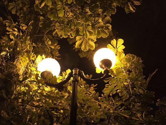Каштаны в свете фонарей. Фото Жени Шведы