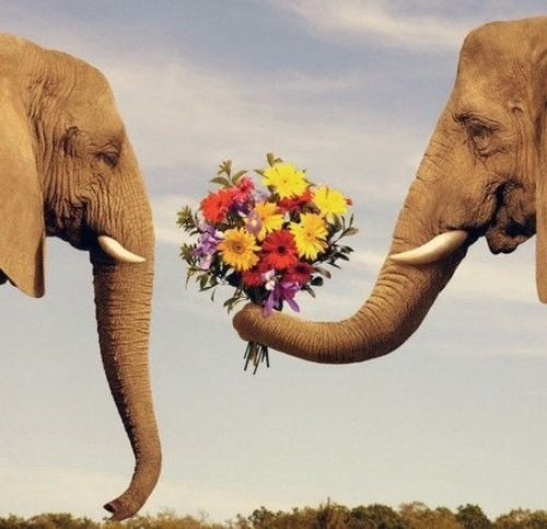 .: Elephant Love, In Love, True Love, Love Is, I Love, Flower, Elephants 3, Animal