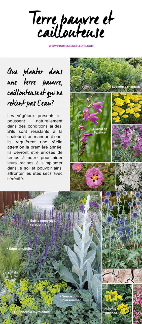 Terrain sec terre pauvre et caillouteuse qui ne retient pas l 39 eau jardins pinterest plantes - Plantes qui poussent dans l eau ...