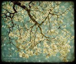Resultado de imagen para arboles con flores de dos colores