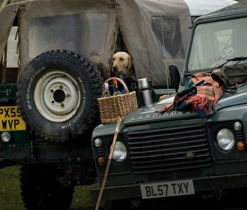 Yellow Lab. Vintage Land Rover