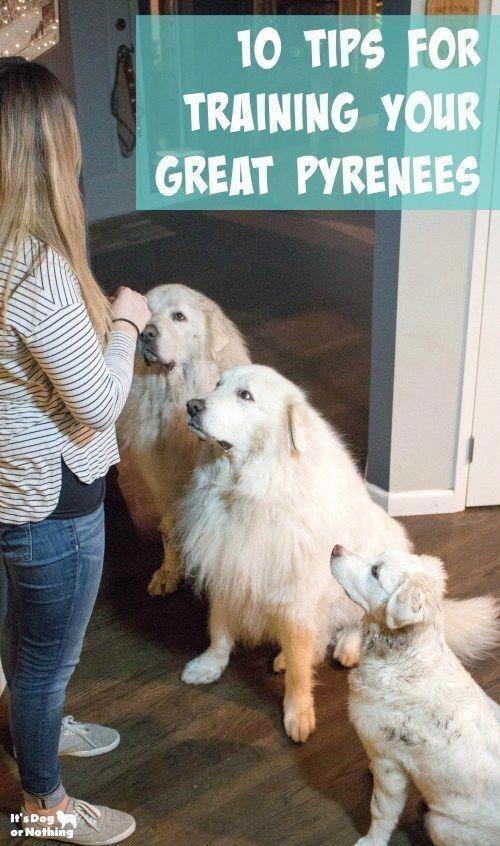 Useful Modern Dog Collar Dogfood Dogtrainingschedule Great