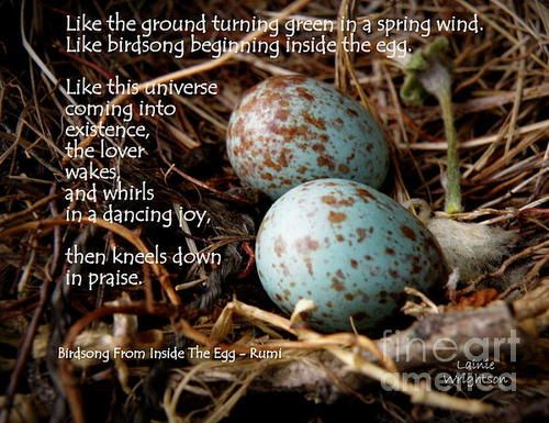 Birdsong From Inside The Egg Poster By Lainie Wrightson