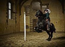 Cavendish's Horses Return!, Sat 17 & Sun 18 Aug 2013, Bolsover Castle   English Heritage