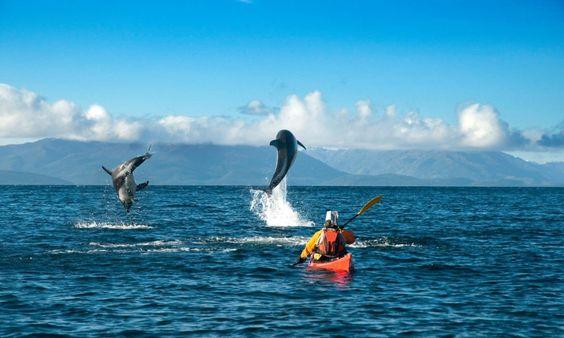 Estrecho de Magallanes en kayak Punta Arenas
