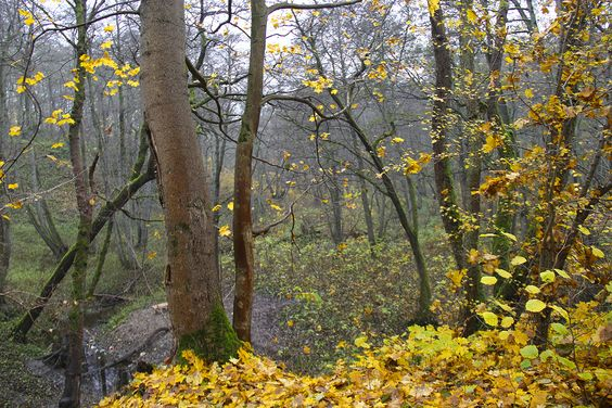 Лес у реки Чистая. Фото: Evgenia Shveda