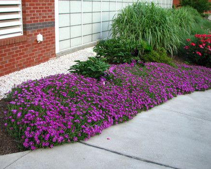 Landscapes ice and perennials on pinterest for Easy maintenance perennials