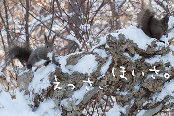 Photographer hiDeki`s HP. nature.