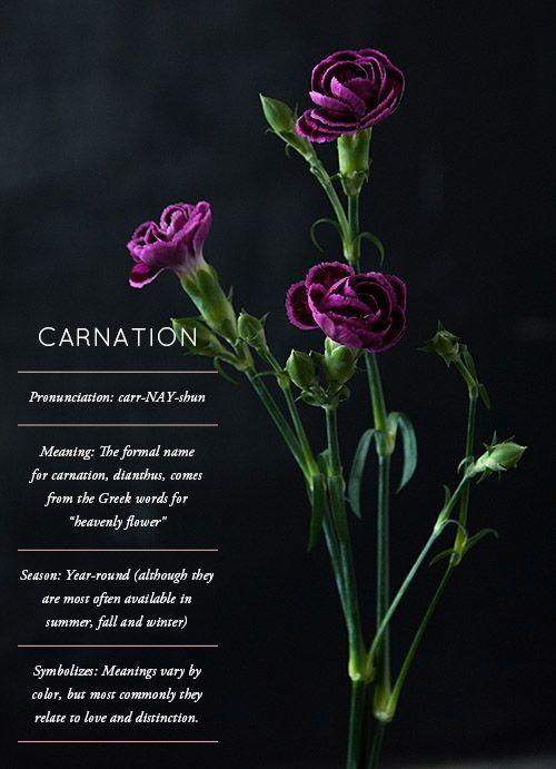 Flower Glossary Carnation Carnation Flower Glossary In 2020 Carnations Flower Meanings Carnation Flower