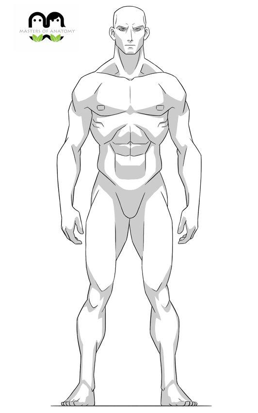 Anatomía animaciones - Maestros de Anatomía