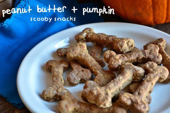 pumpkin + peanut butter scooby snacks