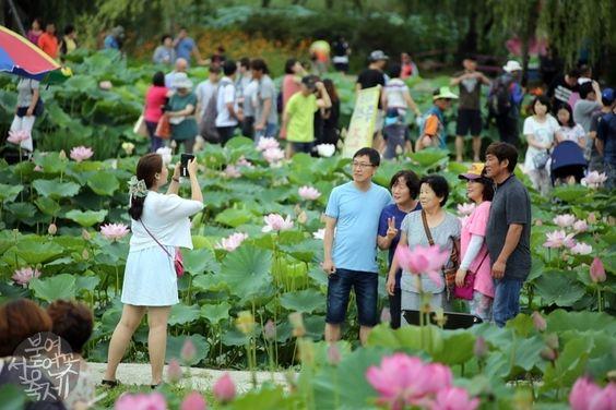 Lễ hội sen thu hút nhiều khách tham quan