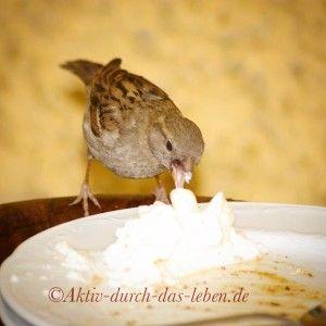 Ein hungriger Spatz im Café des Schloss Schönbrunn in Wien.