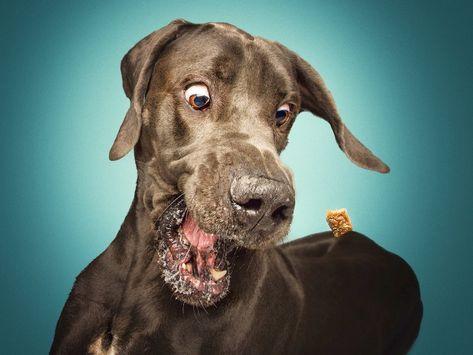 Darum Solltest Du Deinen Hund Besser Nicht Umarmen Christian Vieler Hunde Fotos Und Hunde