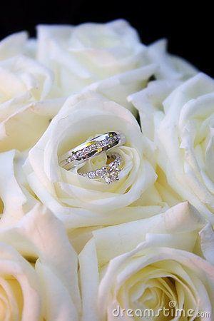 Rings in white roses by Jason Hawkins, via Dreamstime