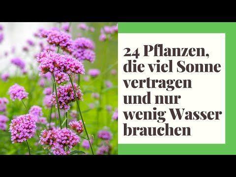 24 Pflanzen Die Viel Sonne Vertragen Und Wenig Wasser Brauchen Pflanzen Vollsonne Youtube Sukkulenten Garten Pflege In 2020 Drought Tolerant Plants Herbs Drought