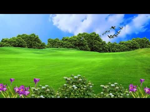 Green Grass Garden Background And No Copyright Video Youtube In 2021 Grasses Garden Green Grass Grass Garden background png hd images