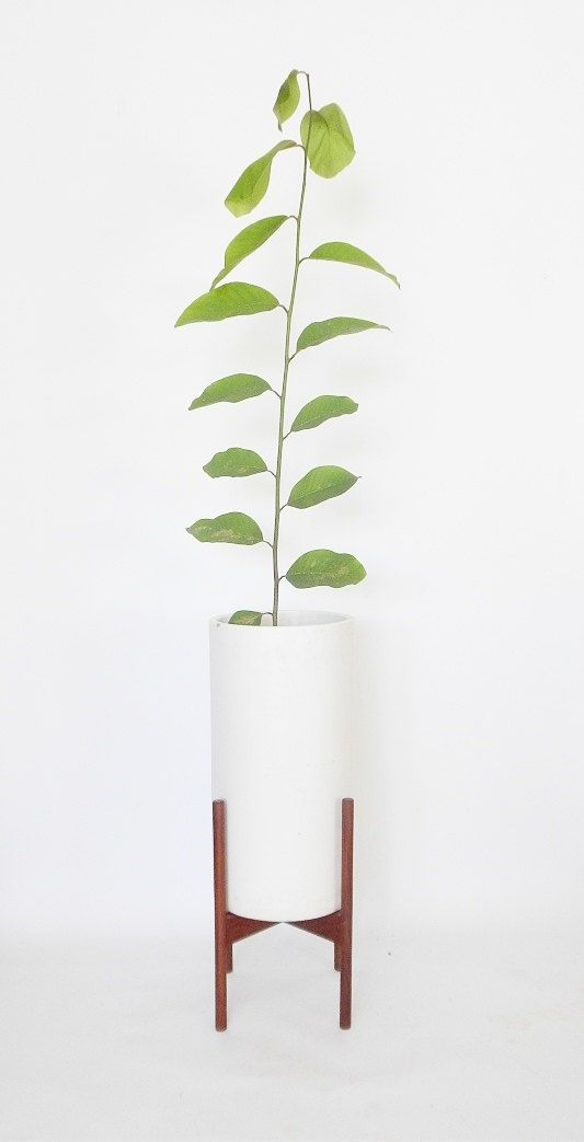 Pedestal entry ways and stand for on pinterest - Pedestal para plantas ...