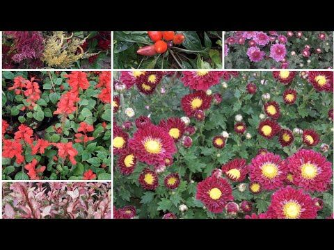 326 सर द य क फ ल क न म र ट Options Must Have Winter Flowers Rates Name Youtube In 2020 Winter Flowers Flowers Garden
