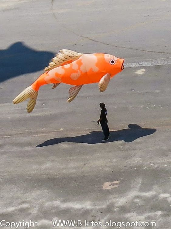 Festivals kites and koi on pinterest for Koi fish kite