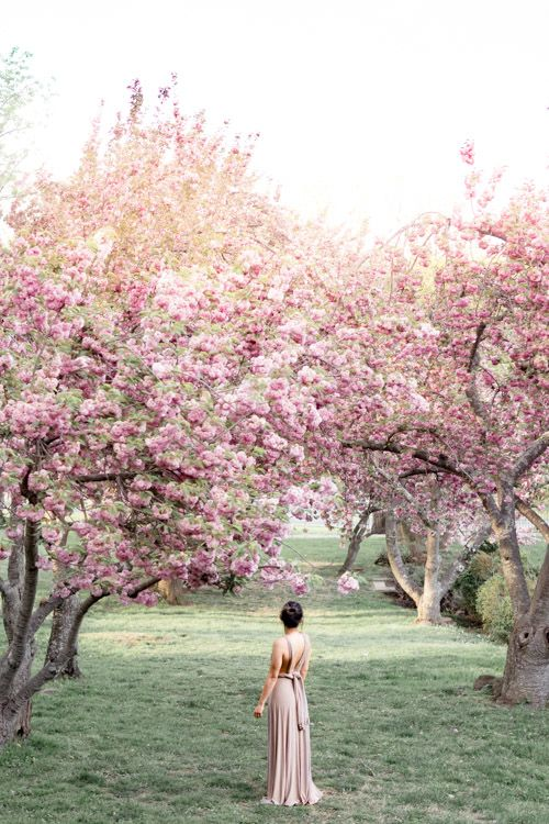 5 Magical Places To See Cherry Blossoms In Maryland With Kids Cherry Blossom Pictures Spring Pictures Spring Photos