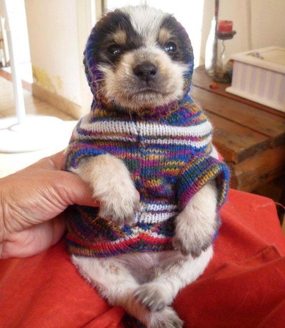 Porotito (perrito en adopcion)