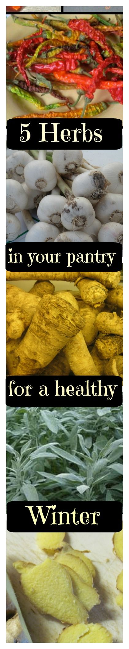 5 herbs in your pantry can = healthy winter! These herbs are a packed with healing attributes   nutrients. Includes recipes1