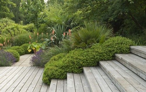 layers of plant material, varieties of textures and heights, along these wood steps and deck