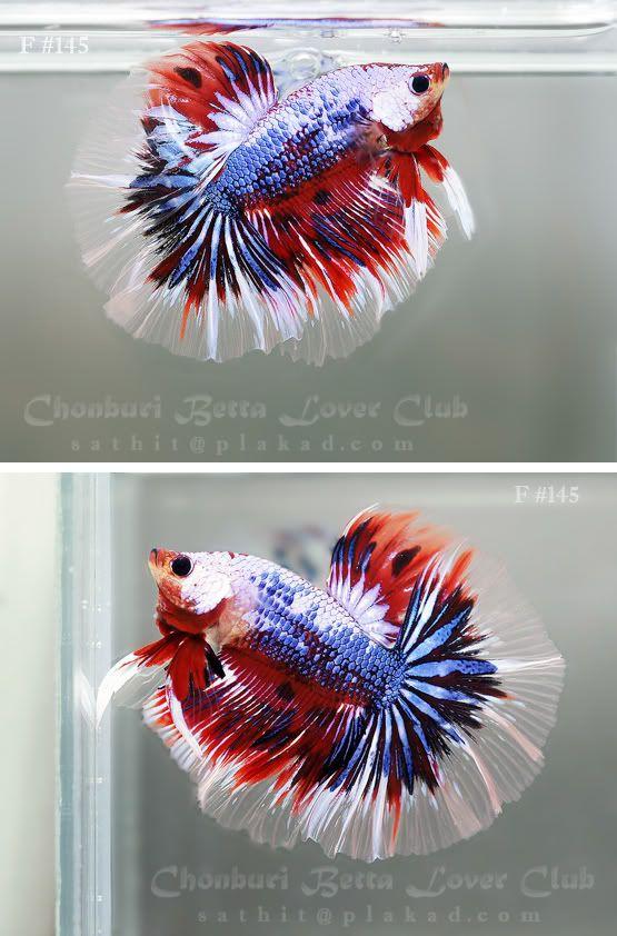 4th july aquarium charleston sc