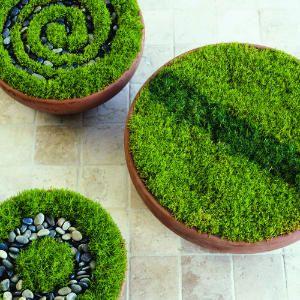 Crop circles in garden pots