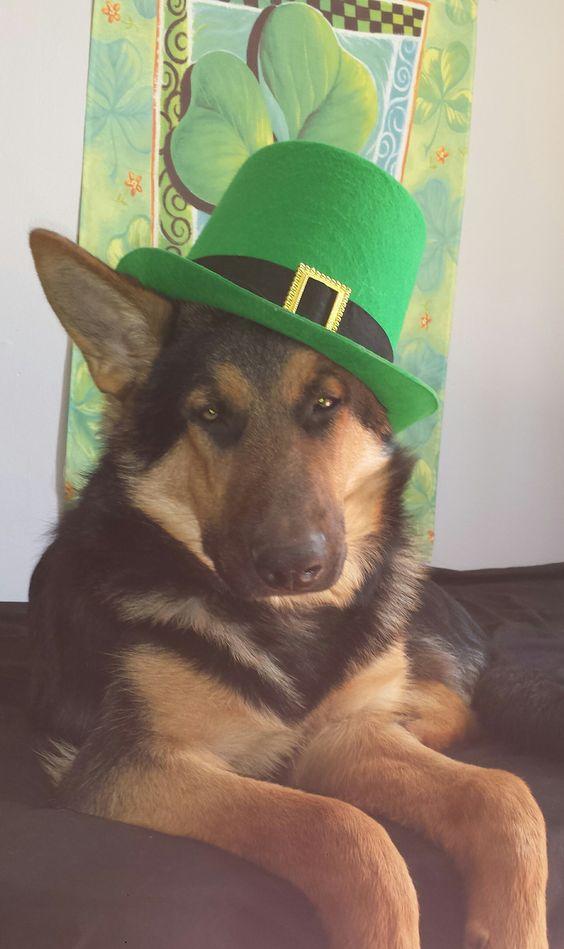 GSD ~ Garen ♡ ~ St. Patrick's:
