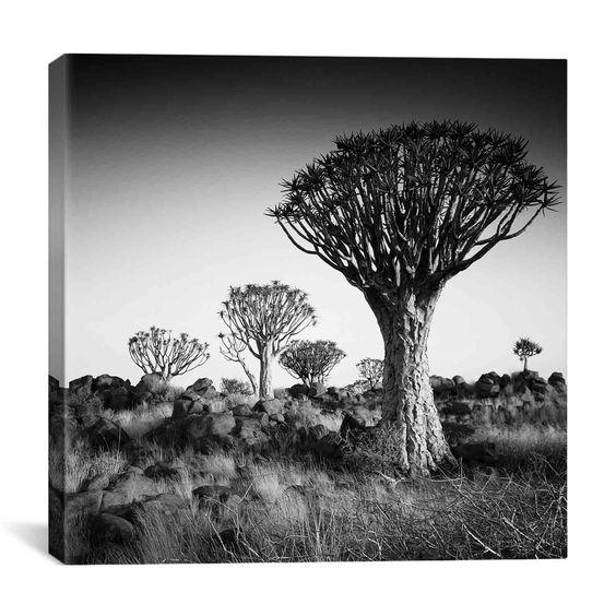 iCanvas Nina Papiorek Namibia Quiver Trees Canvas Print Wall Art
