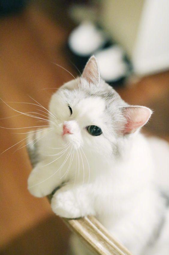 Happy Cats Mergecat Kitten Cat Legenddreams Catgame Kitty