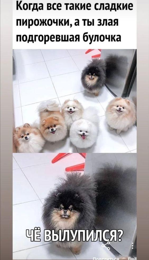 Собаки - такие собаки. Подборка смешных мемов про собак, которая вас точно развеселит. | Юлия Хрис | Яндекс Дзен