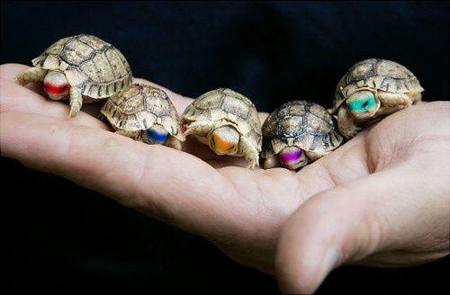 Mini ninja turtles