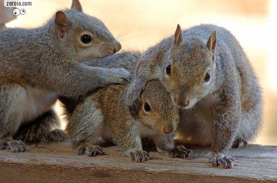 filhotes de esquilo - Pesquisa do Google