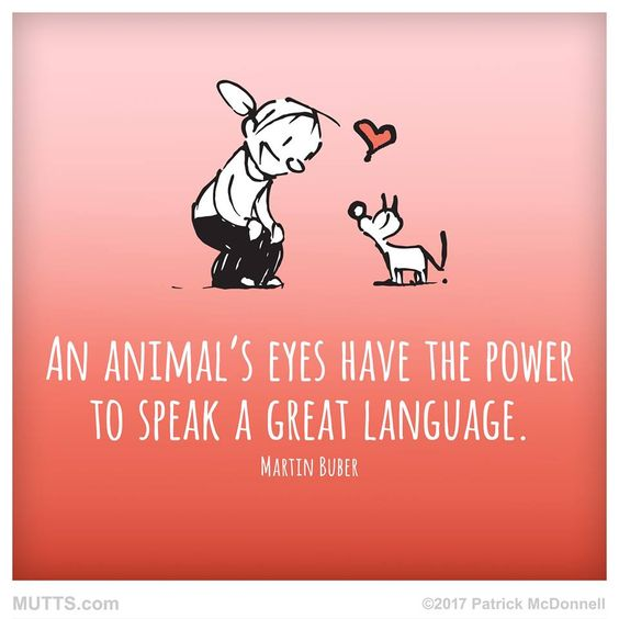 There is no #love like #pet love!