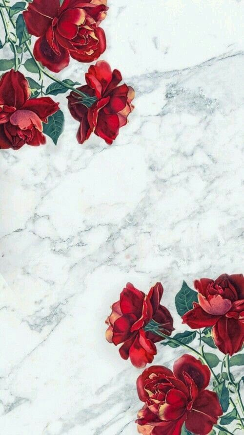 Katkaliskovcova Rose Wallpaper Pretty Wallpapers Iphone Wallpaper