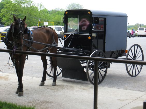 Amish Buggy. Photo by Frederick Meekins