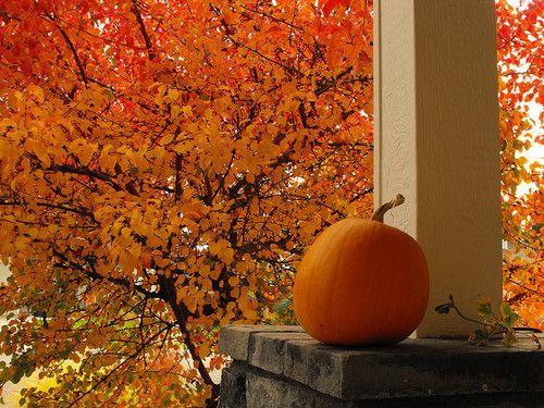 gorgeous color!: Fall Pumpkin, Autumn Scene, Seasons Autumn, Favorite Time, Autumn Leaves, Fall Favorite, Autumn Fall, Autumn Orange, Fall Color