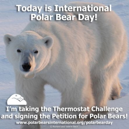 Social Media for YOU to Use on International Polar Bear Day | Polar Bears International: