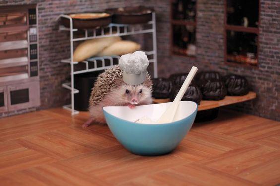 The Adventures Of Humphrey J Hedgehog: