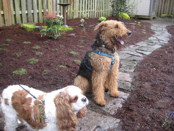 Hardscape Backyard For Dogs :  backyard and more in the backyard back yard backyards yards dogs the o